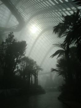 cloud forest1.jpg