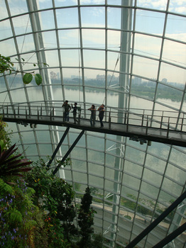 cloud forest2.jpg